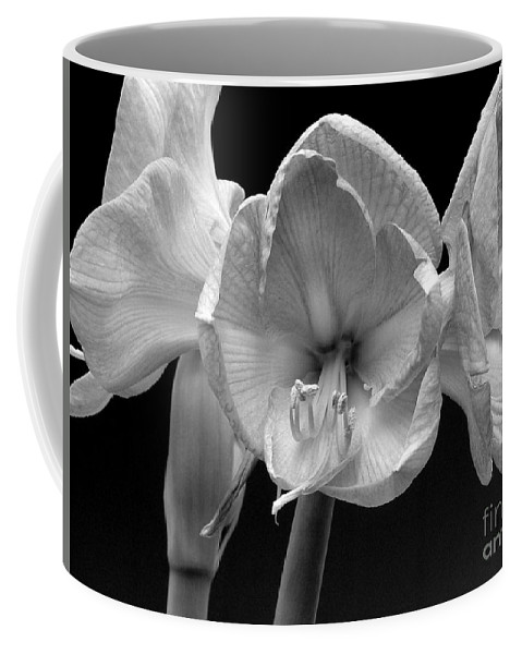 Amaryllis Coffee Mug featuring the photograph Three Amaryllis Black And White Print by James BO Insogna