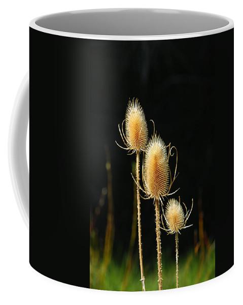 Botanical Coffee Mug featuring the photograph Three Amigos by Donna Blackhall