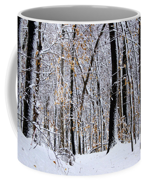 Trees Coffee Mug featuring the photograph Three Creeks Conservation Area - Winter by Cricket Hackmann