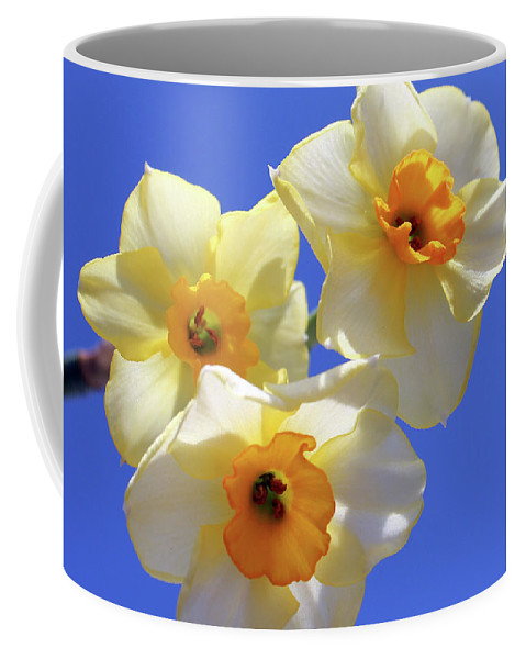 Daffodil Coffee Mug featuring the photograph Three Daffodils by Judy Vincent