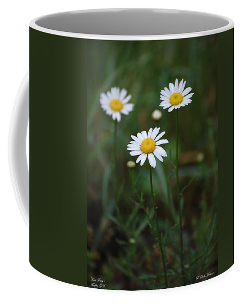 Flowers Coffee Mug featuring the photograph Three Daisy's by Robert Meanor