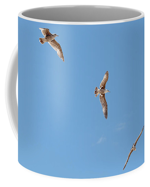 Flying Coffee Mug featuring the photograph Three Gulls by Jay Billings