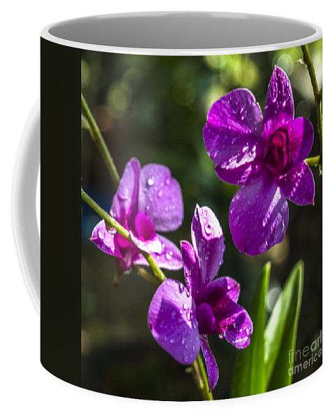 Michelle Meenawong Coffee Mug featuring the photograph Three In One by Michelle Meenawong