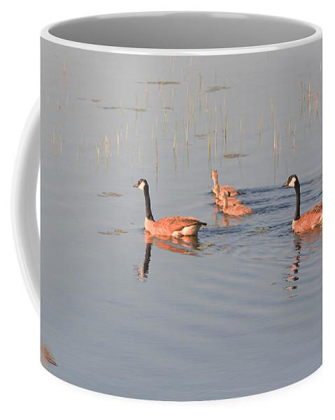 Canadian Geese Coffee Mug featuring the photograph Three Kids by Linda Kerkau
