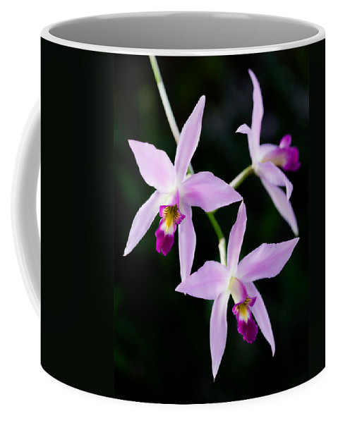 Orchid Coffee Mug featuring the photograph Three Orchids by Marilyn Hunt