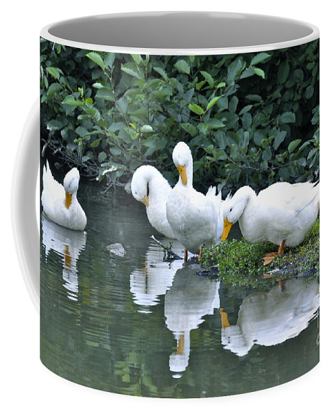 White Ducks Coffee Mug featuring the photograph Three Out Of Four by Penny Neimiller