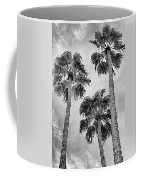 Palm Springs Coffee Mug featuring the photograph Three Palms Bw Palm Springs by William Dey