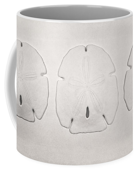 Scott Norris Photography Coffee Mug featuring the photograph Three Sand Dollars by Scott Norris