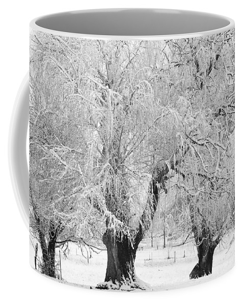 Black And White Coffee Mug featuring the photograph Three Trees In The Snow - Bw Fine Art Photography Print by James BO Insogna