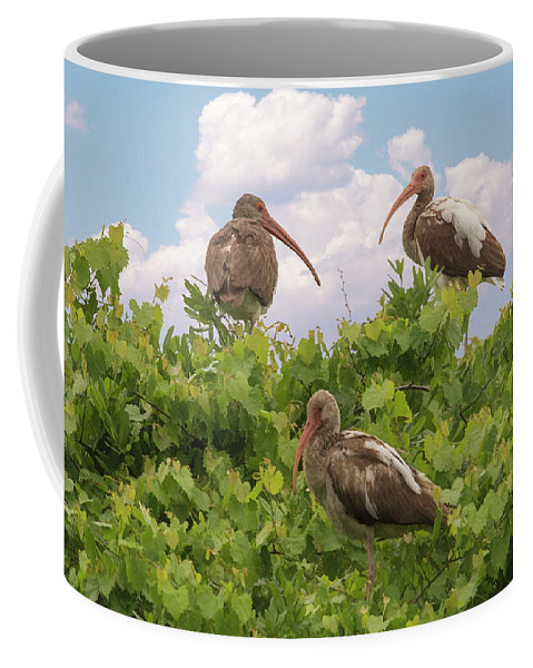 Ibis Coffee Mug featuring the photograph Three's A Crowd by Priscilla Burgers