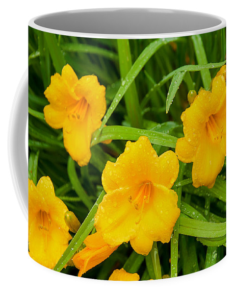 Yellow Coffee Mug featuring the photograph Threes by Greg Fortier