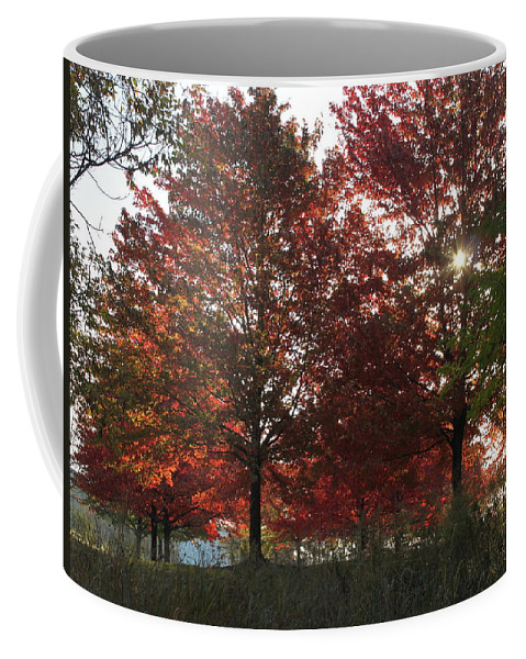 Fall Coffee Mug featuring the photograph Through The Leaves by Lauri Novak