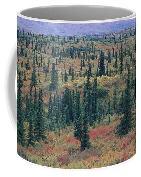 Tiaga Coffee Mug featuring the photograph Tiaga Fall Colors, Tundra And Spruce by Rich Reid