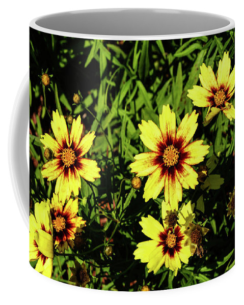 Coreopsis Coffee Mug featuring the photograph Tickseed by Kevin Gladwell