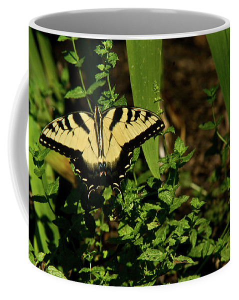 Tiger Coffee Mug featuring the photograph Tiger Butterfly Posing by Douglas Barnett