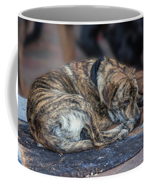 Buskers Coffee Mug featuring the photograph Tiger Dog And The Buskers by John Haldane