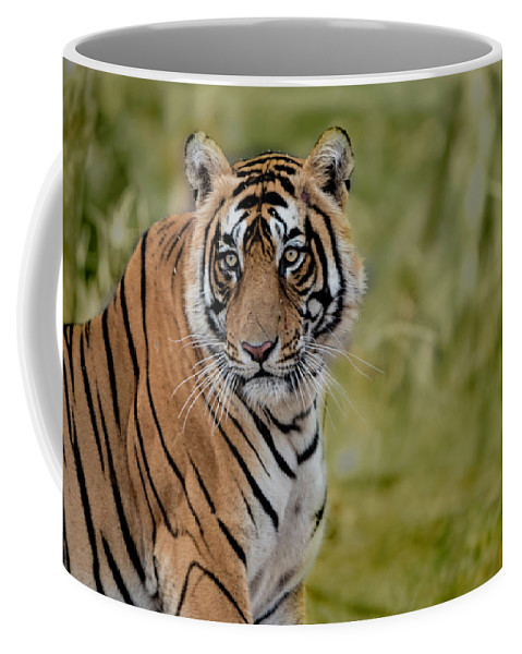 Tiger Coffee Mug featuring the photograph Tiger Look by Pravine Chester