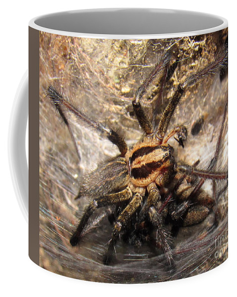 Tiger Spider Appalachian Tarantulas Appalachian Arachnids Appalachian Biodiversity Smoky Mountain Biodiversity Blue Ridge Biodiversity Of Life On Earth Rare Spiders Of Appalachia North American Arachnids North American Spiders Large Orange Spider With Black Stripes Black And Orange Spider Halloween Spider Smoky Mountain International Biosphere Endangered Species North Carolina Spiders Creepy Critters Woodland Creatures Of The Forest Wild Things Wildlife Savage Garden Entomology Coffee Mug featuring the photograph Tiger Spider by Joshua Bales