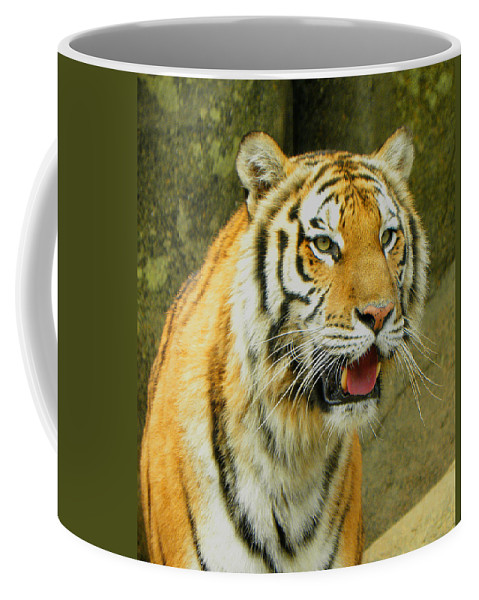 Tiger Coffee Mug featuring the photograph Tiger Stare by Sandi OReilly