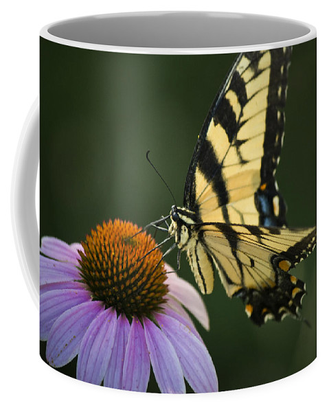 Butterfly Coffee Mug featuring the photograph Tiger Swallowtail 1 by Teresa Mucha