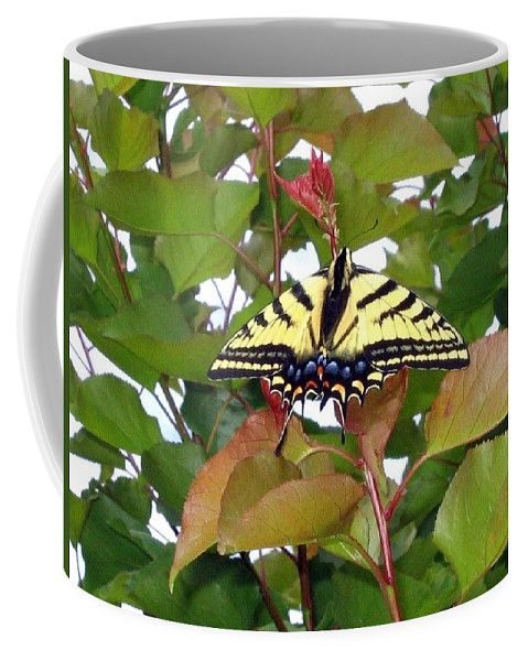 Butterfly Coffee Mug featuring the photograph Tiger Swallowtail Butterfly by Will Borden
