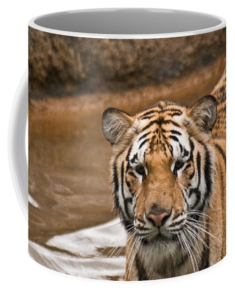 Tiger Coffee Mug featuring the photograph Tiger Wading Stream by Douglas Barnett