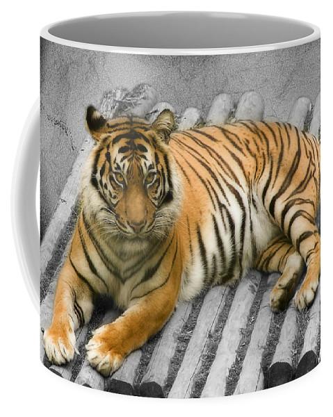 Animal Coffee Mug featuring the photograph Tigers Look by Svetlana Sewell