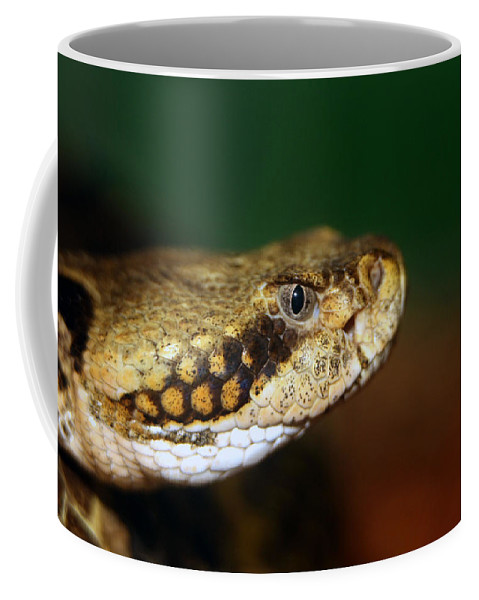 Animal Coffee Mug featuring the photograph Timber Rattler Head On by Alan Look