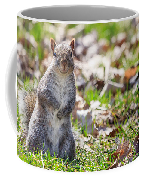 Animal Coffee Mug featuring the photograph Time For Dinner? by Joni Eskridge