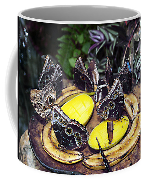 Lunch Coffee Mug featuring the photograph Time Out For Lunch by Bob Johnson