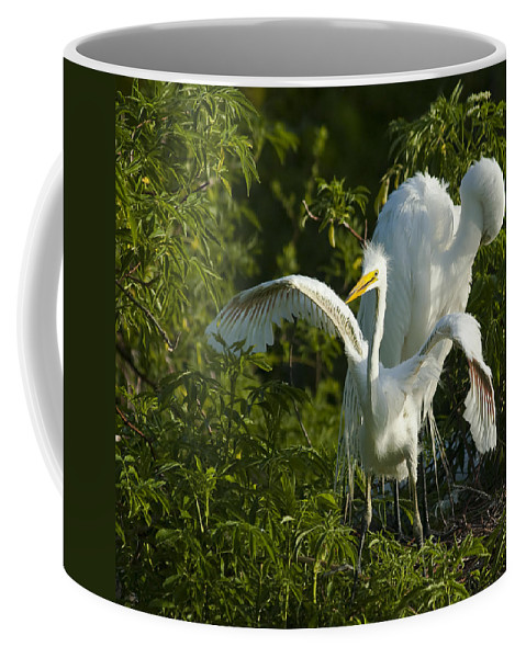 Egret Coffee Mug featuring the photograph Time To Fly by Carolyn Marshall