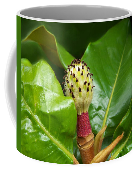 Magnolia Coffee Mug featuring the photograph Time To Rest by Jai Johnson