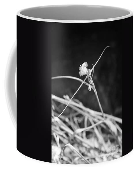 Wildflowers Coffee Mug featuring the photograph Tiny Ballerina by Kathy McClure
