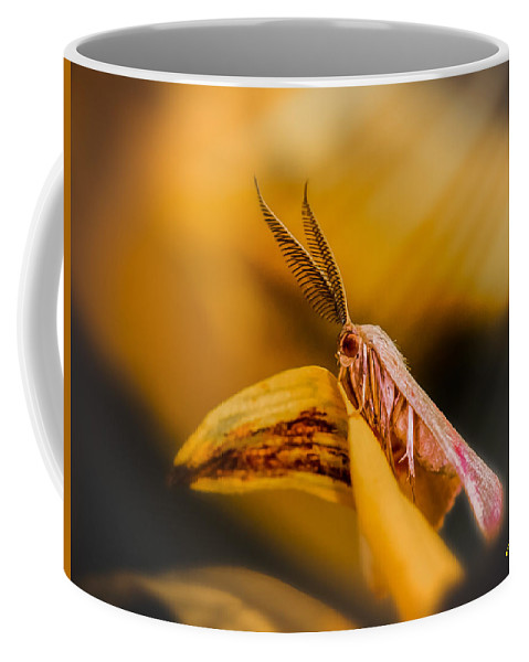 Animals Coffee Mug featuring the photograph Tiny Butterfly by Rikk Flohr
