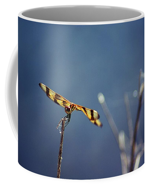 Dragonfly Coffee Mug featuring the photograph Tiny Dragon by Lisa Clark