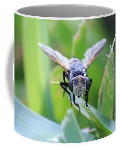 Fly Coffee Mug featuring the photograph Tiny Fly by Carol Groenen