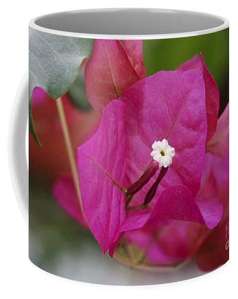 Coffee Mug featuring the photograph Tiny Little White Flower by Deborah Benoit
