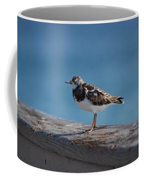 Bird Coffee Mug featuring the photograph Tippi Hedren by Rob Hans