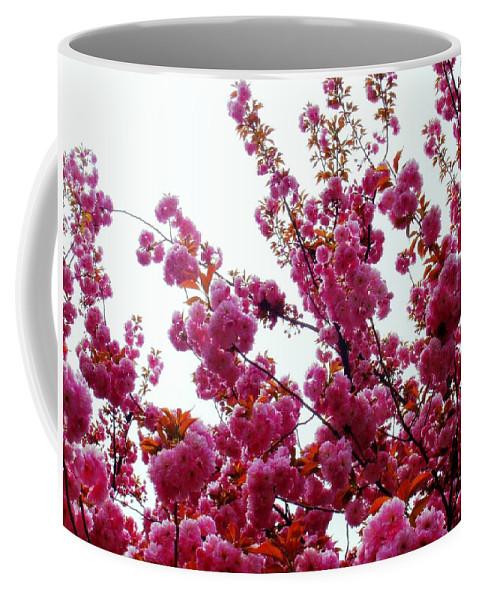 Cherry Blossom Coffee Mug featuring the photograph Tis The Season by Deborah Crew-Johnson