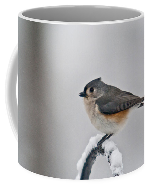 Titmouse Coffee Mug featuring the photograph Titmouse Ready To Fly by Douglas Barnett