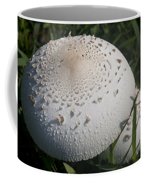 Nature Coffee Mug featuring the photograph Toad Stool by Steven Natanson