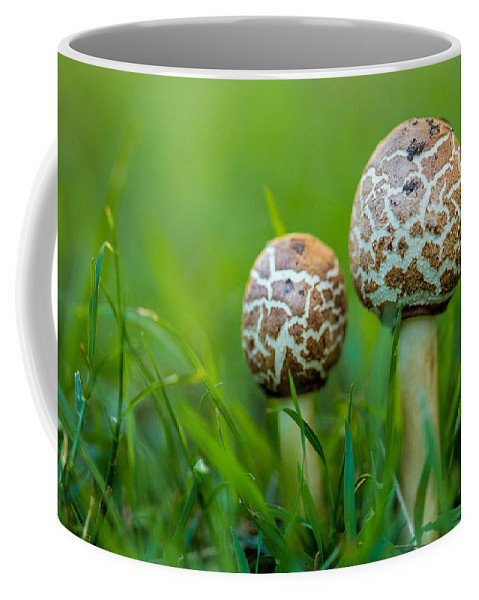Tooadstools Coffee Mug featuring the photograph Toadstools by Keith Hawley