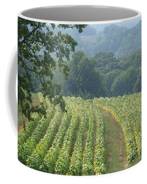 Landscape Tobacco Field Coffee Mug featuring the photograph Tobacco Field by Susan Jenkins
