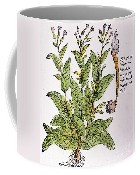 1576 Coffee Mug featuring the photograph Tobacco Plant by Granger