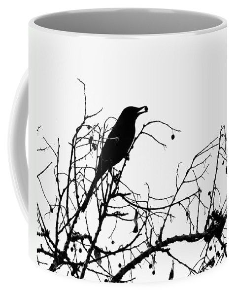 Nature Coffee Mug featuring the photograph Top Bird by Peg Urban