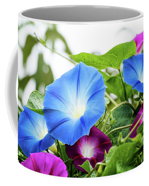 Coffee Mug featuring the photograph Top Of The Morning Glories by Camille Lopez