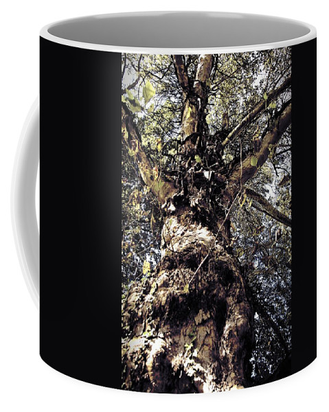Tree. Forest. Leaf Coffee Mug featuring the photograph Topiary by Scott Wyatt