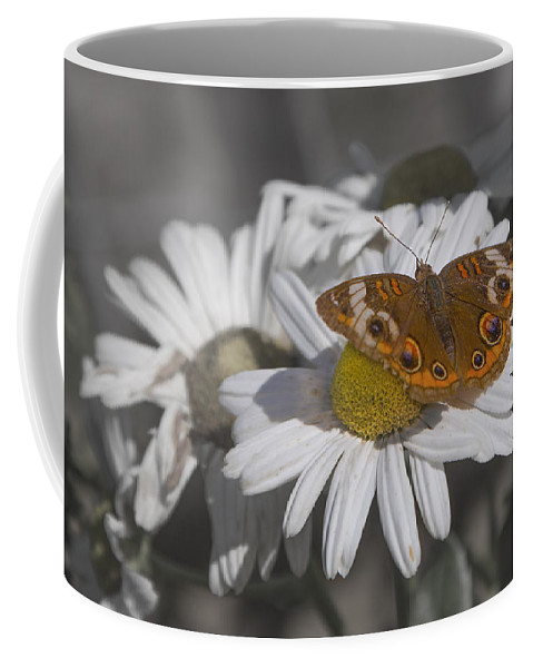 Topsail Coffee Mug featuring the photograph Topsail Butterfly by Betsy Knapp