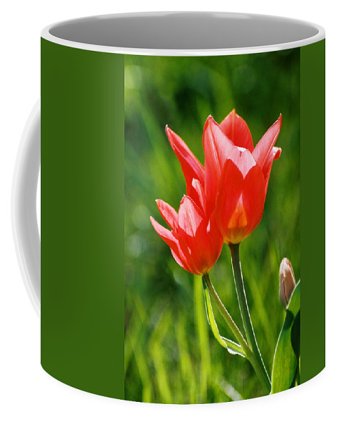 Flowers Coffee Mug featuring the photograph Toronto Tulip by Steve Karol