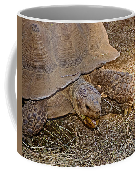Tortoise Eating Lunch In Living Desert Zoo And Gardens In Palm Desert Coffee Mug featuring the photograph Tortoise Eating Lunch In Living Desert Zoo And Gardens In Palm Desert-california by Ruth Hager